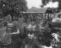 Japanese Garden, Green Hill, 1905. Photographer Thomas E. Marr.